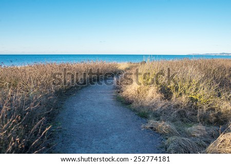 dirt road in the forest by the sea - stock photo