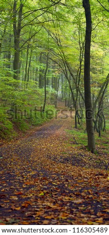 Dirt road in the mixed forest (beech, oak and hornbeam) in a misty day, autumn, Saarland / Germany. Stitched - stock photo
