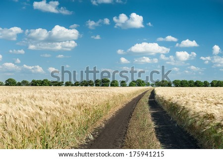 dirt road in wheat field