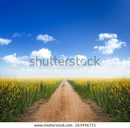 Dirt road into yellow flower fields with clear blue sky - stock photo