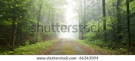 Dirt road leading through a foggy forest - stock photo
