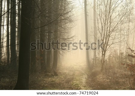 Dirt road leading through the early spring forest on a foggy morning. - stock photo