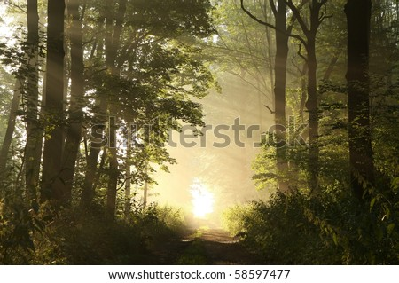 Dirt road leading through the woods on a foggy summer morning. - stock photo