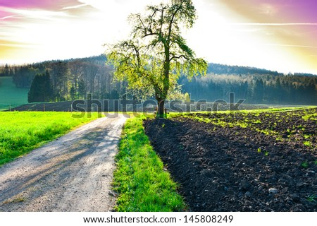 Dirt Road near the Forest in Swiss Alps, Sunrise - stock photo
