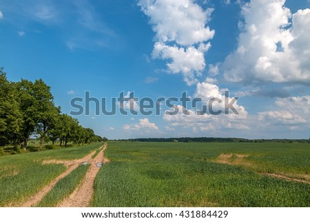 Dirt road on the edge of wheat field