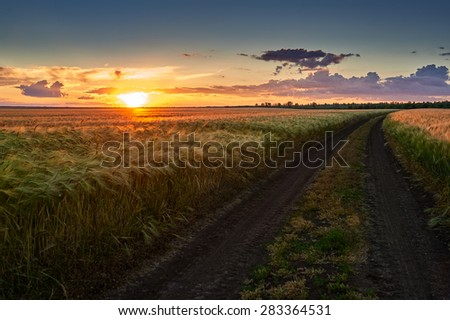 dirt road on wheat field and sunset sky landscape - stock photo