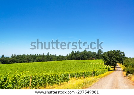 Dirt road passing through a vineyard in Oregon wine country - stock photo