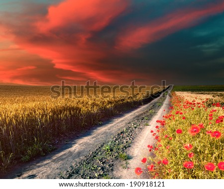 Dirt road that leads through agricultural estates at sunset - stock photo