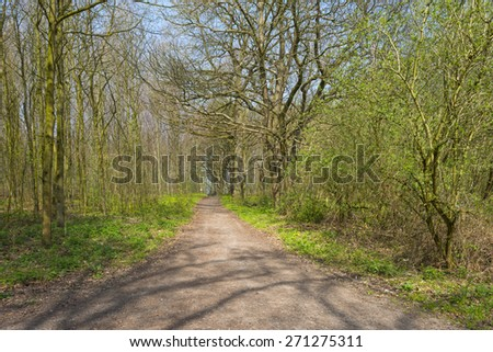 Dirt road through a forest in sunlight in spring - stock photo