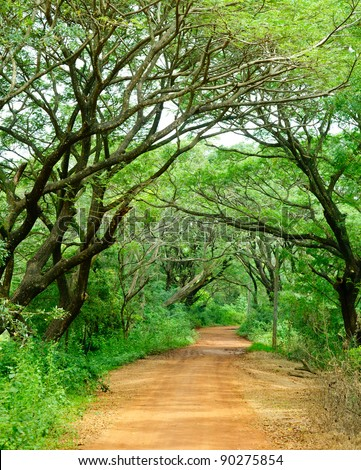 Dirt road through dense rainforest in Sri Lanka - stock photo