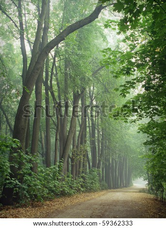Dirt Road through Misty Forest. Scan 6*7 Fuji Provia - stock photo