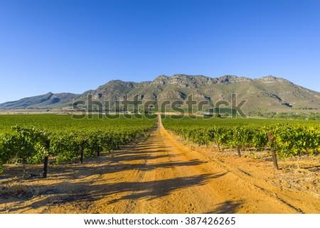 Dirt road through rural countryside grape vineyard South Africa - stock photo