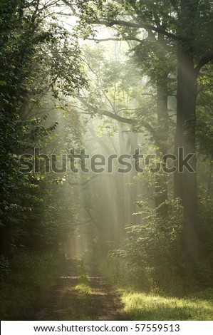 Dirt road through the forest in the rays of morning sun. - stock photo