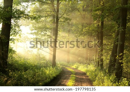 Dirt road through the spring deciduous forest on a foggy morning. - stock photo