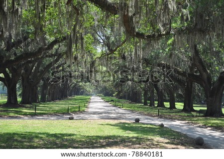 Dirt road to the plantation with moss oaks - stock photo