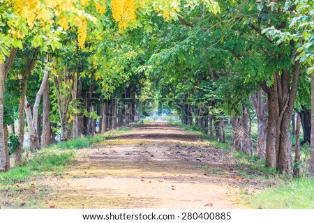 dirt road trees tunnel - stock photo