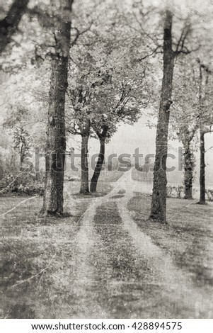 Dirt track with several trees on both sides, textured into a foggy tranquil feeling in sepia tones. - stock photo