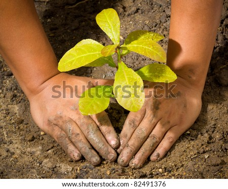 Dirty and muddy of male hands and tree ground plant - stock photo