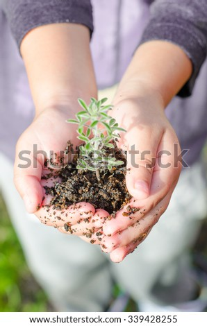 Dirty boy hands holding small young herbal sprout plant. Organic fruit and vegetables. Ecology, World Environment Day, Earth Day, World food day concept. - stock photo