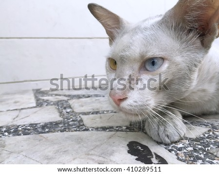 Dirty cat eye color Watching something - stock photo