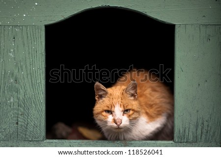 Dirty cat in the dog's house - stock photo