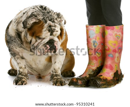dirty dog and muddy boots - english bulldog sitting beside woman wearing rubber boots on white background - stock photo