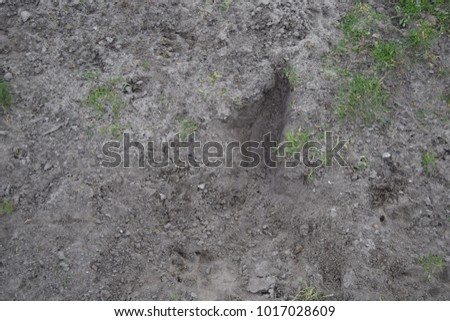 Dirty ground texture