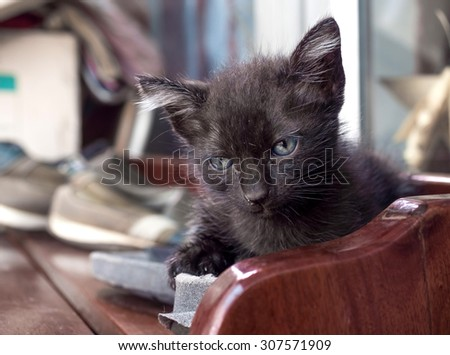 Dirty little cute black cat on outdoor shoe shelf