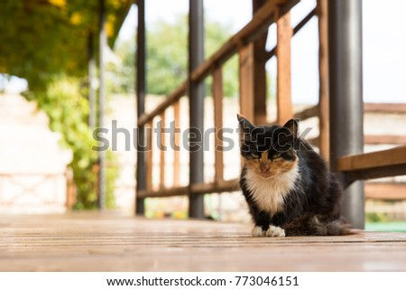 Dirty Cat Stock Images Royalty Free Images Amp Vectors