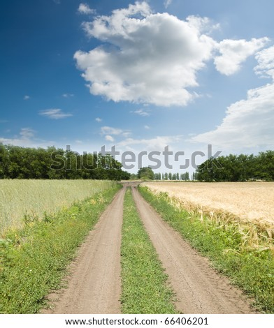 dirty road between green and gold fields - stock photo