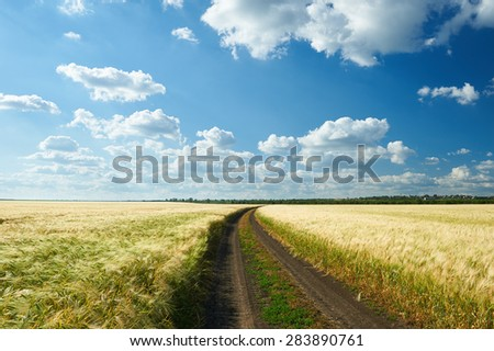 dirty road on wheat field and blue sky landscape - stock photo