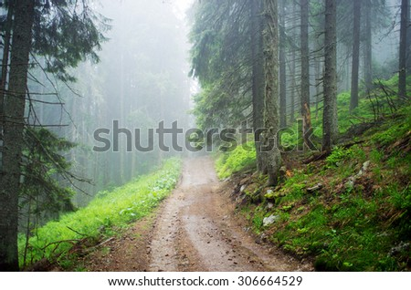 dirty road through forest mountain  - stock photo