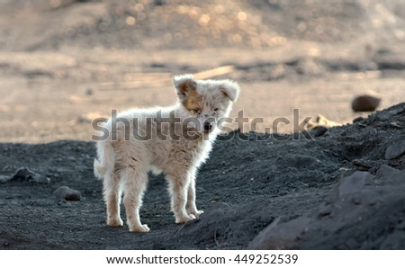 dirty slum dog shoot outside of the city - stock photo