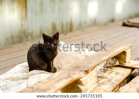 Dirty street cat sitting in factory closeup photo - stock photo