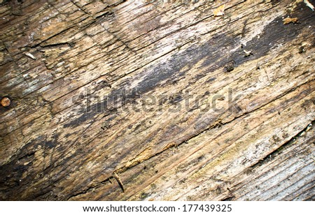 Dirty wet tree closeup. Wood texture.