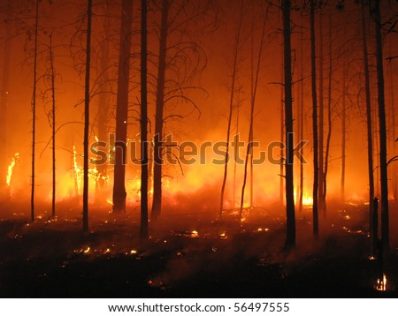 Disaster with fire in the forest - stock photo