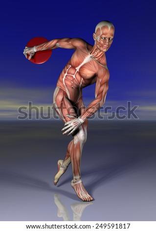Discobolo Anatomia Ilustración de stock249591817: Shutterstock