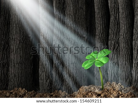Discover opportunity and prosperity finding success as a business concept with a green four leaf clover growing in a dark forest with beams of light shinning on the icon of fortune and luck. - stock photo