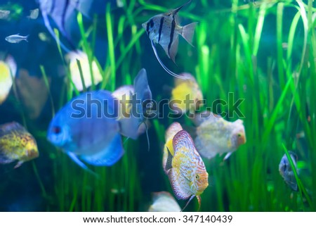 discus fish in  grass at water