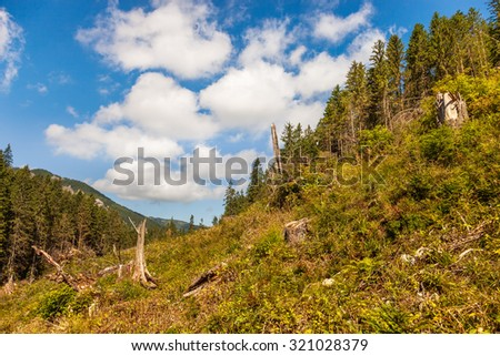 Disease and deforestation along the mountain slopes in Tatras, Poland.