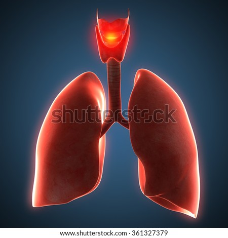 Disease illustration of human lungs. - stock photo