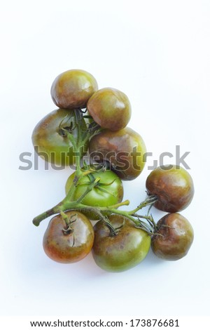Diseased tomatoes - Destroyed tomatoes due to natural disaster  - stock photo