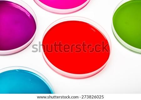 Dish, petri, closeup. - stock photo