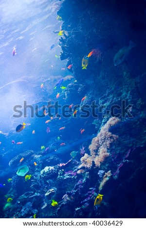 Display of Colorful Caribbean Fish Appropriate for a Background Image - stock photo