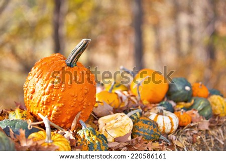 Display of different Pumpkins on hay with vivid autumn background for Halloween  - stock photo