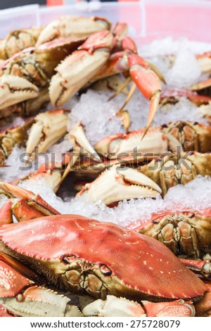Display of fresh Dungeness crab - stock photo