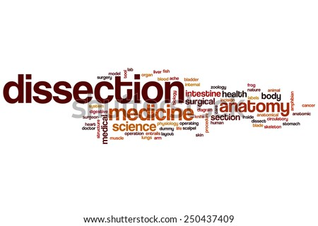 Dissection word cloud concept - stock photo