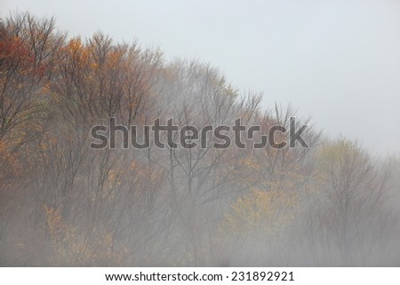 Distant forest surrounded by thin fog in autumn - stock photo