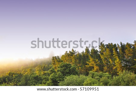 distant view of some young redwood forest - stock photo