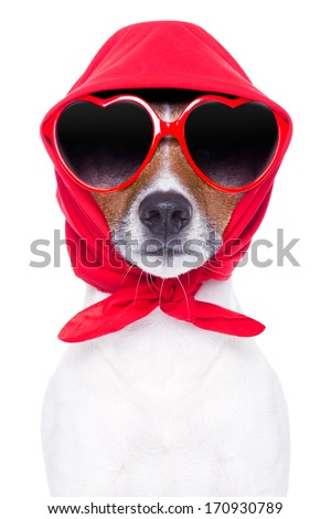 diva dog with red sunglasses cool looking - stock photo